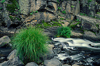 Black River<br /> Apache National Forest<br /> White Mountains<br /> Colorado Plateau,  Arizona