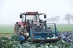 Kappesernte am Niederrhein<br /> <br /> Ein neblig-trüber Novembertag. Am frühen Morgen<br /> fährt Hans-Wilhelm Loersch, Landwirt aus Kerken-Stenden am Niederrhein, mit dem Trecker  raus aufs Feld, zur Ernte von einzelnen Kohlköpfen<br /> (Rotkohl und Weisskohl )für verschiedene Kunden ( Restaurants und Privatkunden )<br /> die bei ihm bestellt haben.<br /> <br /> Einige Schläge am Strunk und der Kappes landet zum Abtransport auf seinem Trecker und später auf den Tellern seiner Kunden.