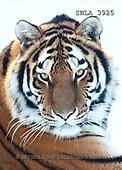 Carl, ANIMALS, wildlife, photos(SWLA3925,#A#)