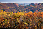 Autumn color in Monroe State Forest on the Mohawk Trail, Monroe, Berkshire Hills, MA, USA