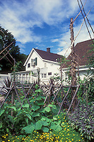 Trellis cucumbers, marigolds, culinary sage herbs Salvia officinalis purpurea, cordoned fruit trees, in mixed vegetable garden with house, fence, garage, blue sky, willow trellis support for beans, white fence, garage shed, big trees