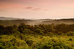 Savanna and tropical rainforest at sunrise, Kibale National Park, western Uganda