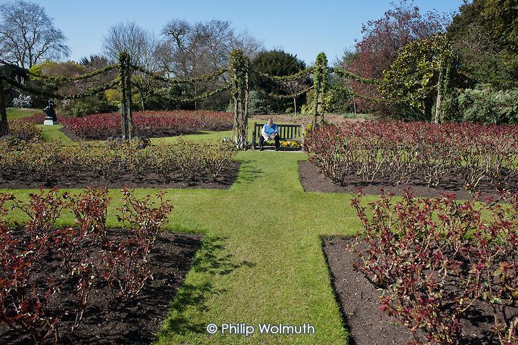 Queen Mary's Gardens, Regent's Park, London.