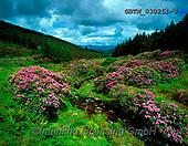 Tom Mackie, LANDSCAPES, LANDSCHAFTEN, PAISAJES, FOTO, photos,+6x7, bloom, blooming, blossom, blossoms, composition, Eire, EU, Europa, Europe, European, horizontal, horizontally, horizonta+ls, Ireland, Irish, leading lines, medium format, rhododendron,6x7, bloom, blooming, blossom, blossoms, composition, Eire, EU+Europa, Europe, European, horizontal, horizontally, horizontals, Ireland, Irish, leading lines, medium format, rhododendron++,GBTM030251-3,#L#, EVERYDAY ,Ireland