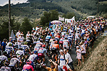 The peloton weaves it's way through the vineyards during Stage 8 of the 2019 Tour de France running 200km from Macon to Saint-Etienne, France. 13th July 2019.<br /> Picture: ASO/Pauline Ballet   Cyclefile<br /> All photos usage must carry mandatory copyright credit (© Cyclefile   ASO/Pauline Ballet)