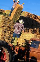 Cowboys Loading Hay