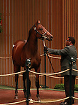 13 September 2011.Hip #285 Candy Ride - Seeking Results colt sold for $250,000.