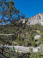 im Schweizer Nationalpark, Val Müstair-Münstertal, Engadin, Graubünden, Schweiz, Europa<br /> Swiss Nationalpark, Val Müstair-Münster Valley, Engadine, Grisons, Switzerland