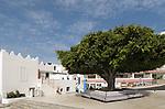 Spain, Canary Islands, La Palma, Puerto Naos: popular resort at the west coast, Bay tree