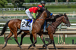 ARCADIA, CA. SEPTEMBER 30:  #2 Abel Tasman, ridden by Mike Smith, in the post parade of the Zenyatta Stakes (Grade l) on September 30, 2018, at Santa Anita Park in Arcadia, CA.(Photo by Casey Phillips/Eclipse Sportswire/CSM)