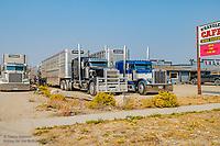 Bull Wagons