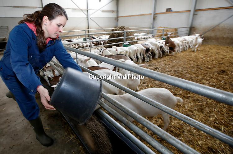Foto: VidiPhoto<br /> <br /> LUNTEREN – Hulpboerin Judith Hendrikse-van Trierum (28) uit Lunteren is het manusje van alles op boerenbedrijven in de wijde omgeving. Als ZZP'er helpt ze onder andere met voeren, melken en het bereiden van kaas. De Lunterse is vooral dol op geiten. In de toekomst hoopt ze een geitenmelkerij te starten of over te nemen.
