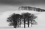 Winter landscape, Hokkaido, Japan<br /> Hokkaido's deciduous forests are dominated by oaks (Quercus sp.), basswoods (Tilia sp.), and ash (Fraxinus sp.).<br /> Canon EOS-1D X, EF70-200mm f/2.8L IS II USM lens, f/11 for 1/320 second, ISO 100