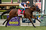 """ARCADIA, CA  SEPTEMBER 28:  <br /> #1 Mirth, ridden by Mike Smith, wins the Rodeo Drive Stakes (Grade l) """"Win and You're Breeders' Cup Filly and Mare Turf Division"""" on September 28, 2019 at Santa Anita Park in Arcadia, CA. (Photo by Casey Phillips/Eclipse Sportswire/CSM)"""