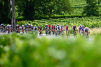 10th July 2021; Carcassonne, France;  The peloton during stage 14 of the 108th edition of the 2021 Tour de France cycling race, a stage of 183,7 kms between Carcassonne and Quillan.