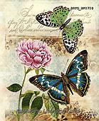 Alfredo, FLOWERS, BLUMEN, FLORES, paintings+++++,BRTOWP1710,#f#, EVERYDAY ,butterfly, butterflies