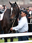 Zenyatta, led by her groom, Mario Espinoza, bids farewell to fans at Hollywood Park, Inglewood, CA, before retiring to Lane's End Farm in Kentucky