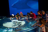 Visitors can touch live striped cat sharks and leopard sharks in an interactive display which is part of the shark exhibition at the Musée Océanographique, Monaco, 5 July 2013. The exhibition, in place until 2015, aims to dispel myths and fears surrounding this animal, today under threat of extinction.