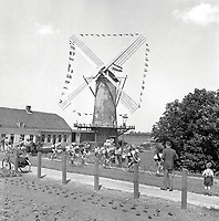 8/7/1954 Tour de France 1954.<br /> Stage 1 - AMSTERDAM to BRASSCHAAT.<br /> The peloton races through the Dutch countryside passing a windmill.<br /> Photo: Offside / L'Equipe. COPYRIGHT WARNING : THIS IMAGE IS RIGHTS MANAGED AND THE COPYRIGHT MAY SIT WITH A THIRD PARTY PLEASE CONTACT simon@swpix.com BEFORE DOWNLOAD AND OR USE