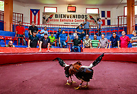 Cock fight coliseum in San Juan, Puerto Rico<br /> For many people is a brutal spectacle, but for most in Puerto Rico cockfighting is a sports and, for sure, is part of their culture.