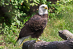 2018 Brookfield Zoo