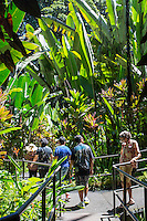 Tourists on the boardwalk near large heliconia plants at the Hawaii Tropical Botanical Garden, Papa'ikou, Big Island of Hawai'i.