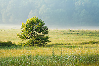 Summer morning in the Cove, Cades Cove