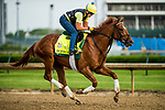 LOUISVILLE, KY - MAY 03: Hofburg, trained by Bill Mott, exercises in preparation for the Kentucky Derby at Churchill Downs on May 3, 2018 in Louisville, Kentucky. (Photo by Alex Evers/Eclipse Sportswire/Getty Images)