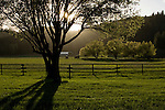 Evening shadows cast a scenic glow across a pasture near Fernan, Idaho