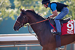 SHA TIN,HONG KONG-DECEMBER 09: maurice,trained by Noriyuki Hori,exercises in preparation for the Hong Kong Cup at Sha Tin Racecourse on December 9,2016 in Sha Tin,New Territories,Hong Kong (Photo by Kaz Ishida/Eclipse Sportswire/Getty Images)