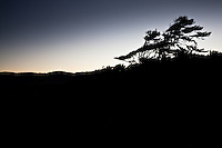 A tree in silhouette against the predawn glow at Sutton Beach north of Florence, Oregon.