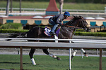 OCT 26 2014:Silento, trained by Gary Mandella, exercises in preparation for the Breeders' Cup Turf Sprint at Santa Anita Race Course in Arcadia, California on October 26, 2014. Kazushi Ishida/ESW/CSM