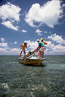sport fisherman boating a lemon shark, Negaprion brevirostris, Florida, Atlantic