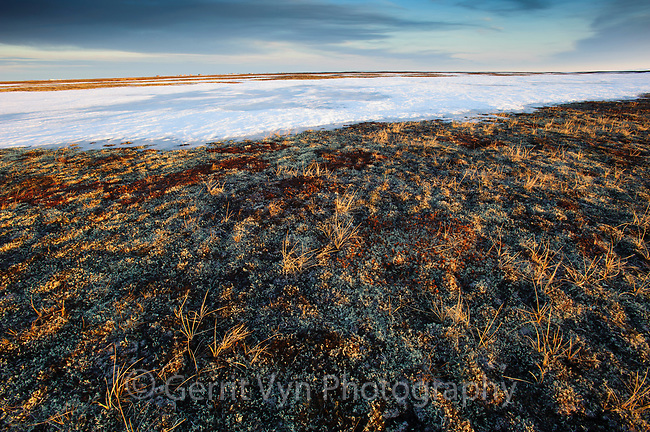 Tundra thawing in spring. Chukotka, Russia. May.