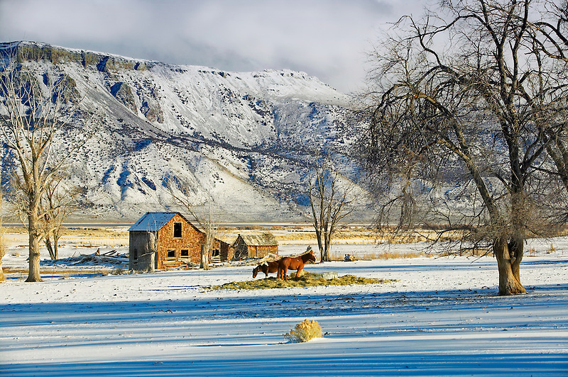 Abandoned farm house with horses, snow and Hart Mountain. Near Plush, Oregon