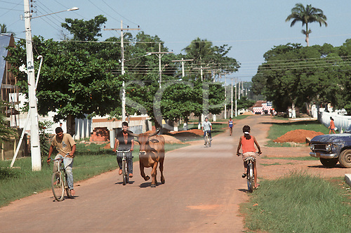Xapuri, Acre State, Brazil. Two men on bicycles with a bullock on a rope in the street.