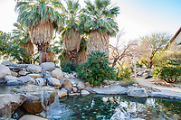 Garden oasis with pond and palm trees in Faye Sarkowsky Sculpture Garden; resilient drought tolerant garden at Palm Springs Art Museum in Palm Desert, California
