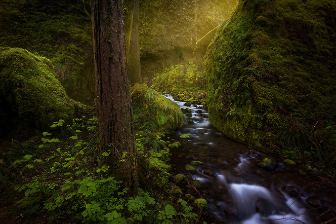 While hiking alone early one morning, I stumbled upon this intimate scene along the creeks of the Columbia River Gorge wilderness.<br /> <br /> ARTIST CHOICE: 24x36 Lumachrome/Acylic