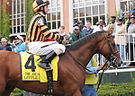 Little Mike, ridden by Ramon Dominguez, runs in the Joe Hirsch Turf Classic Invitational Stakes (GI) at Belmont Park in Elmont, New York on September 29, 2012.  (Bob Mayberger/Eclipse Sportswire)