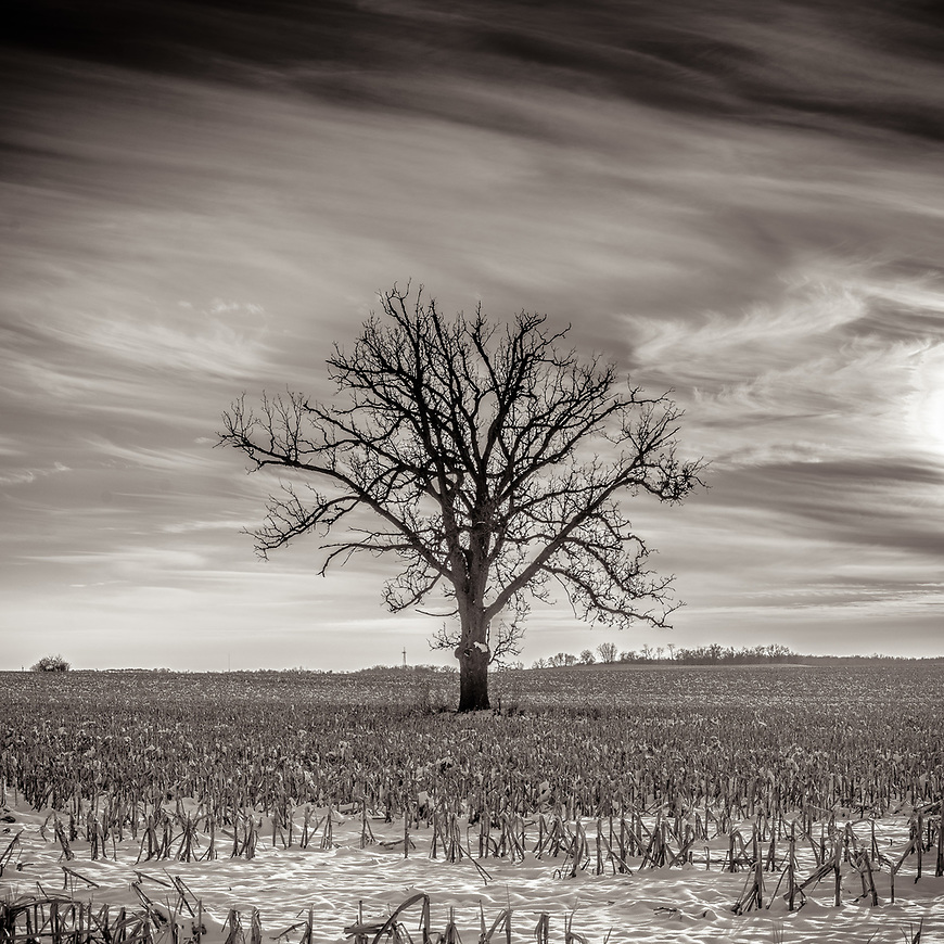 WINTER WIND -- A cornfield just outside Deforest , Wisconsin, USA. #michaelknapstein #midwest #midwestmemoir #blackandwhite #B&W #monochrome #instblackandwhite #blackandwhiteart #flair_bw #blackandwhite_perfection #motherfstop #wisconsin #blackandwhiteisworththefight #bnw_captures #bwphotography #myfeatureshoot  #fineartphotography #americanmidwest #squaremag #lensculture #mifa #moscowfotoawards #moscowinternationalfotoawards #rps #royalphotographicsociety #CriticalMass #CriticalMassTop200 #photolucida #contemporaryphotography <br /> @thec4fap #fineartphotography #portfolioshowcase11