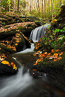 Cascade and fallen autumn leaves