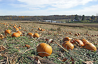 Autumn in Scenic Western Maryland