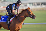 MEYDAN,DUBAI-MARCH 24: Sloan Avenue,trained by Jermy Noseda,exercises in preparation for the Godolphin Mileat Meydan Racecourse on March 24,2016 in Meydan,Dubai (Photo by Kaz Ishida)