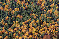 Deutschland, Schleswig- Holstein , Herbstlaub, Herbst, Wald
