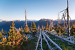 View west from the Deer Park Campgound, on Blue Mountain, shows healing foresgt fire damage, with Hurricane Ridge and the Bailey Range in the background.  Olymppic National Park.  Olympic Penninsula, Washington.  Outdoor Adventure. Olympic Peninsula