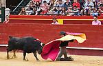 "Feria de Julio de Valencia.<br /> I Certamen de Escuelas Taurinas.<br /> Clases Practicas.<br /> <br /> Novillos de La Palmosilla.<br /> <br /> Pedro Jose Aguilar - E.T. Malaga.<br /> Juan Jose Villa ""Villita"" - E.T. Madrid.<br /> Hector Edo - E.T. Castellon.<br /> Guillermo Garcia - E.T. Madrid.<br /> Rodrigo Ortiz - E.T. Valencia.<br /> Manuel de Reyes - E.T. Nimes/Cataluña.<br /> <br /> 14 de julio de 2017.<br /> <br /> Coso de la Calle Xativa.<br /> Valencia, Valencia - España."
