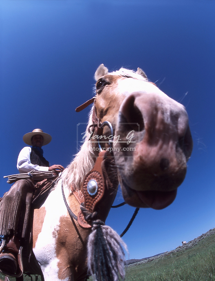 Cowboy on a horse with an exaggerated big nose