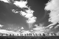 peloton drive-by<br /> <br /> stage 20: San Lorenzo de el Escorial - Cercedilla (176km)<br /> 2015 Vuelta à Espana