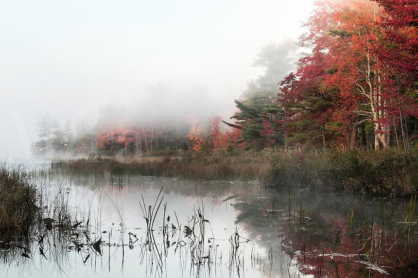 Misty morning landscape, Somesville, Maine, USA