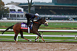 October 28, 2015:  Stephanie's Kitten, trained by Chad Brown, and owned by Kenneth L. and Sarah K. Ramsey, is entered in the Breeder's Cup Filly & Mare Turf $2,000,000.  Candice Chavez/ESW/CSM
